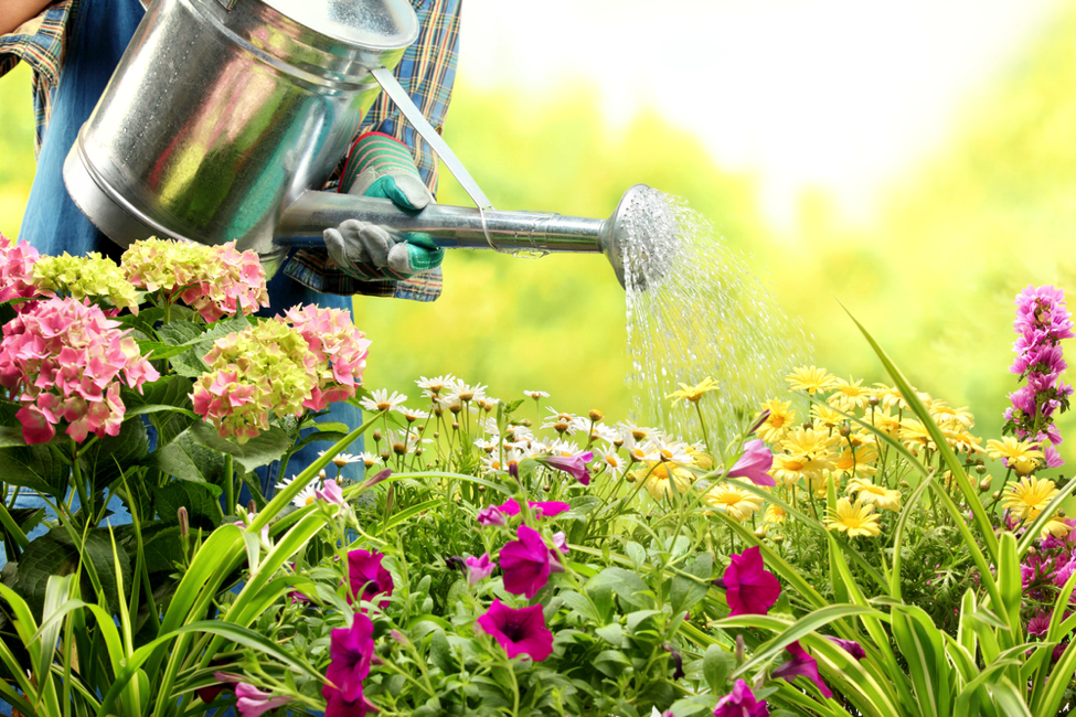 Why Gardening Is Good For Your Health (and other benefits...)
